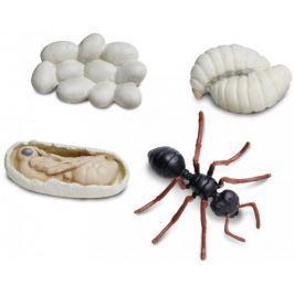Safari Ltd. Cykl życia - Mrówka