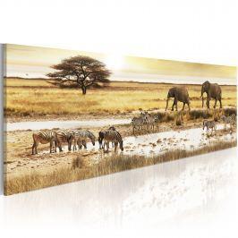 Obraz - Afryka: przy wodopoju (120x40 cm)