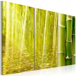 Obraz - Bambus w tafli wody (60x40 cm) Obrazy i plakaty