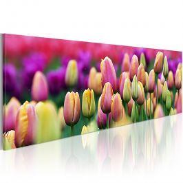 Obraz - Tęczowe tulipany (120x40 cm) Obrazy i plakaty