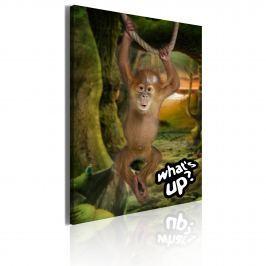 Obraz - Little monkey (50x70 cm)