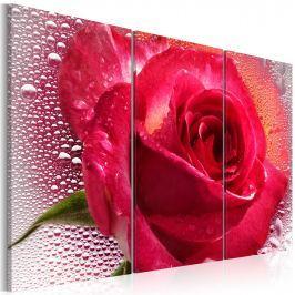 Obraz - Lady Rose - triptych (60x40 cm) Obrazy i plakaty