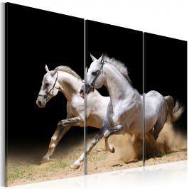 Obraz - Konie - moc i prędkość (60x40 cm) Obrazy i plakaty