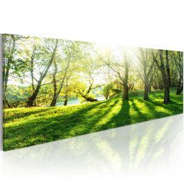 Obraz - W promieniach słońca (120x40 cm)
