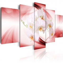 Obraz - Kwiat orchidei w różu i bieli (100x50 cm)