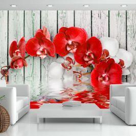 Fototapeta - Rubinowa orchidea (300x210 cm)