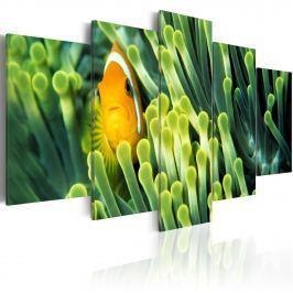 Obraz - Życie w głębiach oceanu (100x50 cm)