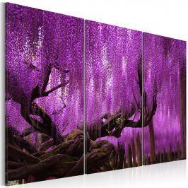 Obraz - Wisteria (60x40 cm)