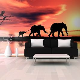 Fototapeta - słonie: rodzina (550x270 cm)