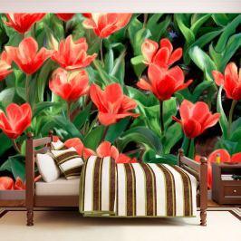 Fototapeta - Painted flowers (200x154 cm)