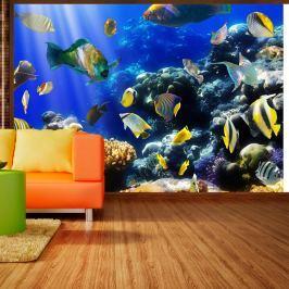 Fototapeta - Podwodna przygoda (300x210 cm)