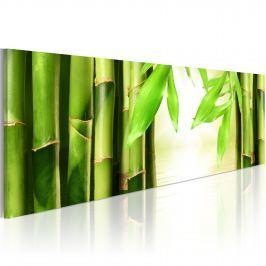 Obraz - Bamboo gate (120x40 cm)