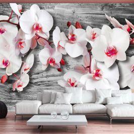 Fototapeta - Oziębłe orchidee (300x210 cm)