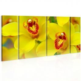 Obraz - Orchids - intensity of yellow color (60x30 cm)