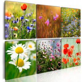Obraz - Łąka tysiąca kolorów (60x40 cm)