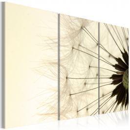 Obraz - Dmuchawiec - lekkość i ulotność (60x40 cm)