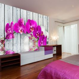 Fototapeta - Violet orchids with water reflexion (200x154 cm)