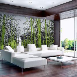 Fototapeta - drzewa - wiosna (200x154 cm)