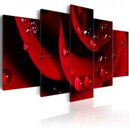 Obraz - Róża z kroplami rosy (100x50 cm)