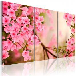 Obraz - Kwiat wiśni (60x40 cm)