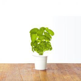 Zestaw 3 kapsułek z nasionami bazylii 0,047kg Click and Grow