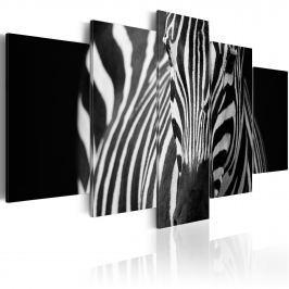 Obraz - Spojrzenie zebry (100x50 cm)