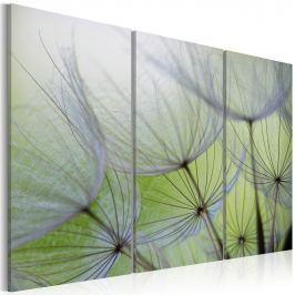 Obraz - (60x40 cm)