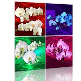 Obraz - Kolorowe orchidee (40x40 cm)