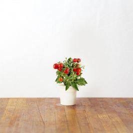 Zestaw 3 kapsułek z nasionami pomidorków koktajlowych 0,047kg Click and Grow