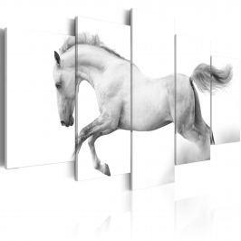 Obraz - Koń - pasja i wolność (100x50 cm)