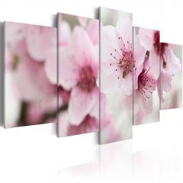 Obraz - Wiśnia - łagodność i piękno (100x50 cm)