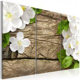 Obraz - Białe kokietki (60x40 cm)