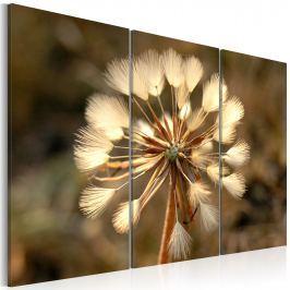 Obraz - Studium dmuchawca (60x40 cm)