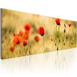 Obraz - Wiosenne maki (120x40 cm)