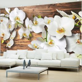 Fototapeta - Oziębłe orchidee II (300x210 cm)