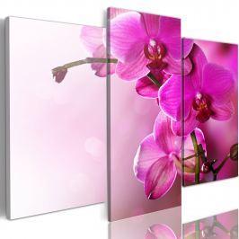 Obraz - Ciemnoróżowa orchidea (60x50 cm)