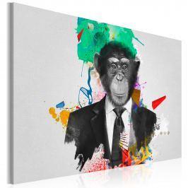 Obraz - Pan Małpa (60x40 cm)