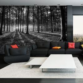 Fototapeta - The Light in the Forest (300x210 cm)