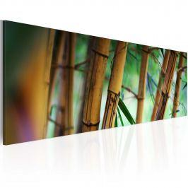 Obraz - Wild bamboos (120x40 cm)