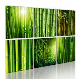 Obraz - Bambus w kilku odsłonach (60x40 cm)