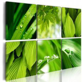 Obraz - Soczysta zieleń liści (60x40 cm)