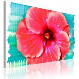Obraz - Hawaiian flower (60x40 cm)