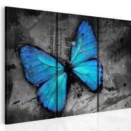 Obraz - Studium motyla - tryptyk (60x40 cm)